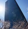 六本木 桜の東京ミッドタウン、そして欅坂は、、、