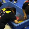 【動画あり】3分で89匹、金魚すくい日本一チームからコツを学んだ@第22回全国金魚すくい選手権大会(奈良県大和郡山市)