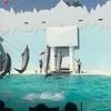 須磨海浜水族園でイルカショー!