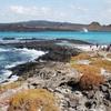 【エクアドル】 ガラパゴス諸島ってこんなところ