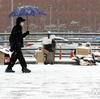 ソウルは雪やで