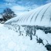 光を求めてビニールハウスの除雪