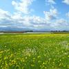 ≪新潟市≫春の福島潟
