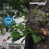 今週は3日も雨予報だが、あえて100kmを目標に設定する[習慣化レビュー 2017/06/05]