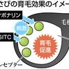 【驚】本わさびが育毛剤として効果があると発表されていた!!