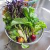 野菜いっぱい