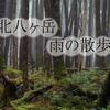 雨の日の山歩き【北八ヶ岳・高見石・白駒池】