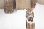 冬の旭山動物園にまた行ってきた! 元気な動物と、ウトウトした動物。