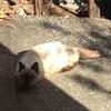 【エムPの昨日夢叶(ゆめかな)】第1699回『代々木上原・野良猫さん事情!?ボスのおかげで穏やかな休日を過ごす夢叶なのだ!?』[11月1日]