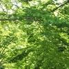 ☆~日光浴と森林浴~☆