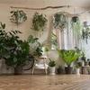 【観葉植物】カビの増殖、シックハウス症候群の対策。観葉植物を増やす育てる。