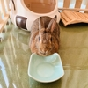 ウサギのちまき今日の1枚『ご飯の催促?』