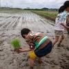 玄米 無農薬にこだわるなら農家直送の通販がおすすめ 愛知のコシヒカリ