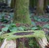 済州島おすすめスポット#チョルムル自然休養林