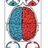 【脳】腕を組んでわかる右脳型or左脳型