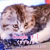 【週末英語#190】ググれは英語で「Google it !」発音もなんとなく似てる