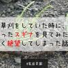 【ヤバイ】草刈をしていた時に、刈ったスギナを見てみたら軽く絶望してしまった話。