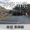 【動画】神奈川県 林道 薬師線