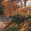秋の庭仕事で修行に励む