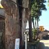 【魚沼市】「干溝諏訪神社の大欅」は健康的で立派!雰囲気いいところです(*^^*)
