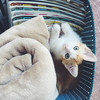 我が家の裏庭で拾った子猫のビスケットの引き取り手が決まりました!