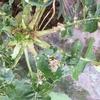 大根の葉に虫食い発見!大根の害虫対策に重要な3つの対処法
