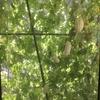 ゴーヤ栽培とちょっと以外な保存方法