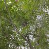 2018/5/31 鳥と植物
