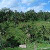 バリ島の風景 - 5 - ライステラス