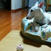 【犬版】ハナちゃんの動物病院 まとめ読み①(Complete)を公開しました。