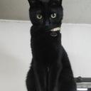 to the moon☽ 黒猫るなのママ日記