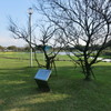 「中村汀女先生生誕百年記念植樹」記念碑