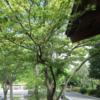 【2019-6月購入履歴】+プチ感想