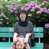 熊谷は能護寺(紫陽花寺)のあじさいが見頃