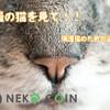 【NEKO COIN】うちの可愛い猫とNEKO COIN