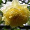 もう2番花ですよ~