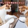カレー色の猫を見て思い出すカレーの記憶