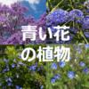 青い花を咲かせる丈夫でおすすめな庭木・植物8選まとめ ~ シンボルツリー,生垣,寄せ植えに