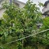 自然豊かな大阪府の豊能町