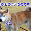 ぽつんと1テント Ver.1(Plyz編)1