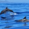 地震前兆百科:水中・水辺の動物:クジラ・イルカ