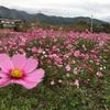 花が見頃を迎えてる南アルプス市