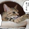 ニケちゃんまん登場!