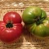 フライド★グリーントマト