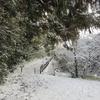 雪の関の山-見晴し台-金石山−大山を歩く〜2021.01.10(sun)〜