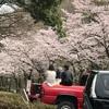 桜がピークを迎える🌸夏野菜の苗植え付け準備