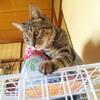 【猫と不要不急の外出】