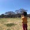 Z会の幼児教材『ぺあぜっと』で作った凧を飛ばした。@昭和記念公園