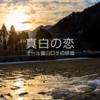 公開間近 真白の恋 オール富山ロケの映画
