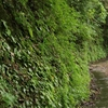 高時川源流 ②植物